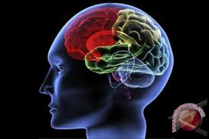Stres pengaruhi otak anak lelaki dan perempuan