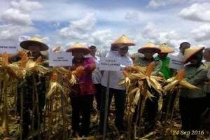 Lampung susun skenario harga singkong Rp1.000/kg
