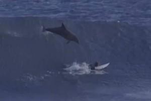 Peselancar Australia ditimpa ikan lumba-lumba