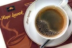 Cara menikmati kopi luwak Lampung