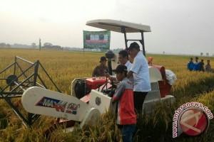 Harga gabah di Lampung naik