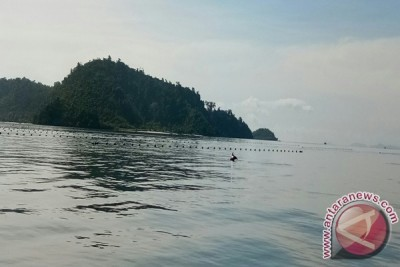 Ikan lumba-lumba muncul di Pantai Ringgung