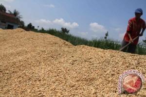 Harga Gabah di Tingkat Petani Lampung Naik