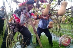 Anggota DPD Panen Labu Madu Lampung Timur