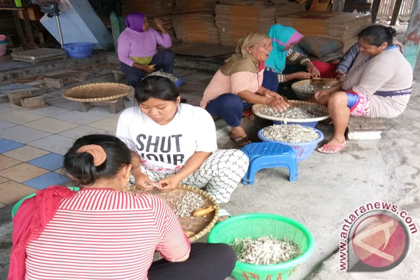 Produksi teri asin Pulau Pasaran anjlok
