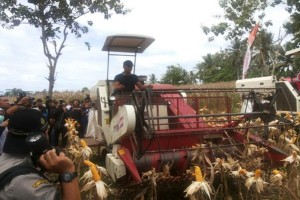 Japfa Berkomitmen Serap Jagung Lokal