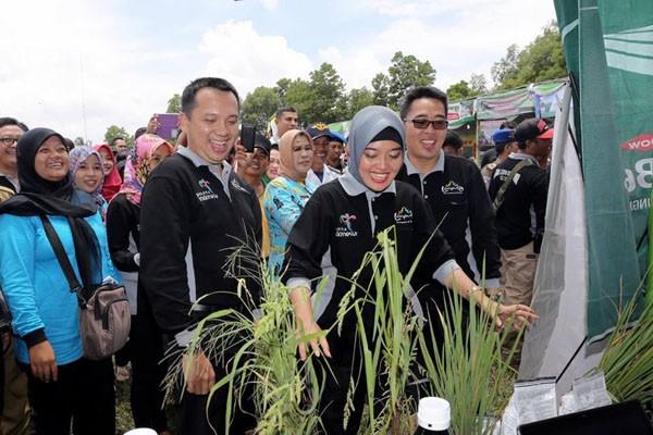 Gubernur Lampung Buka Festival Panen Padi 2017