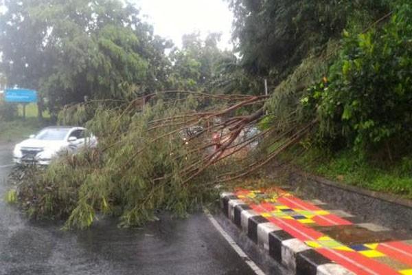BMKG Lampung: Waspadai Hujan dan Angin Kencang