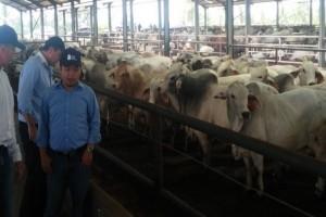 Mutu sapi baik, harga daging tetap tinggi
