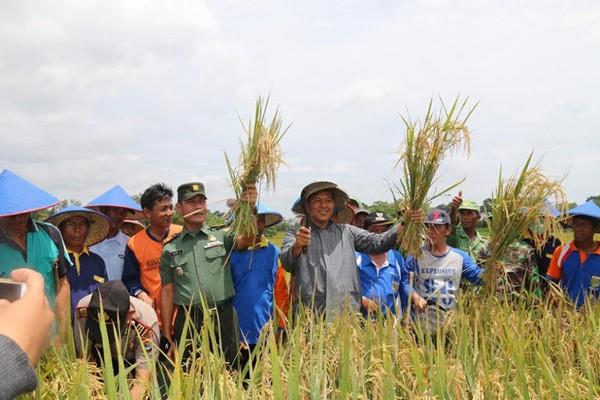 Bupati Lampung Tengah Buka Panen Raya Perdana