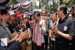 Ribuan Warga Pesisir Barat 'Ngunduh' Damar