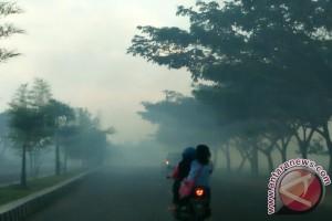 Pengendara Keluhkan Asap Pembakaran Padi Di Pringsewu