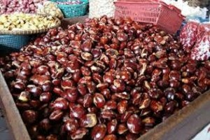 Jengkol Di Jambi Dijual Rp120.000/Kg