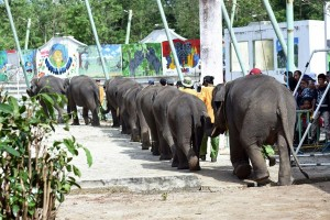 Ratusan Pengunjung Terhibur Atraksi Gajah Way Kambas