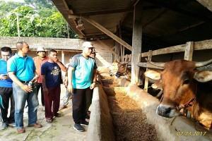 Lampung Tengah Komitmen Jadi Daerah Swasembada Daging