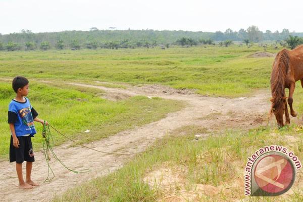 Desa Braja Harjosari Pilihan Agrowisata di Lampung