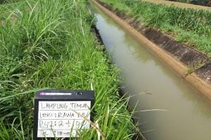 Lampung Timur optimalkan produksi padi