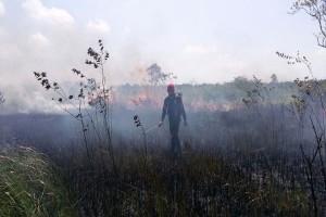 Kebakaran Hutan Way Kambas Dipadamkan