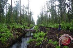 Lahan Gambut Terestorasi Capai 680.000 Hektare