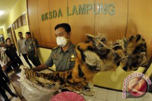 Kulit harimau