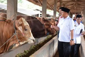 "Lampung Tengah Jadi ""Pilot Project"" Percepatan Sapi Bunting"
