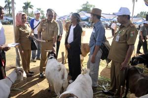 Pringsewu Sukseskan Rembuk Ternak Lampung