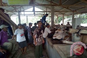 Waykanan Dukung Pemprov Wujudkan Lampung Lumbung Ternak