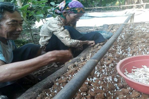 Budi daya jamur ciptakan wiraswasta baru