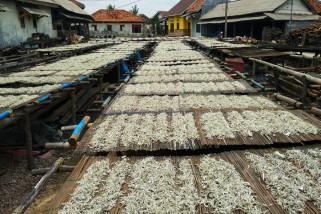 Produksi ikan teri asin Pulau Pasaran anjlok