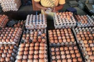 Perayaan Maulid Picu Kenaikan Harga Telur