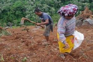 FPPI Mamuju: Hentikan alih fungsi lahan pertanian