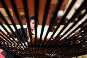 Warga Majene minta pemerintah sosialisasikan pelestarian kemiri