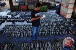 Produksi Ikan PPI Paotere Makassar 3.030 Ton