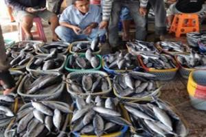 Palu belum maksimalkan pasar ikan higienis