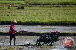 Petani Belum Manfaatkan Sistem Resi Gudang
