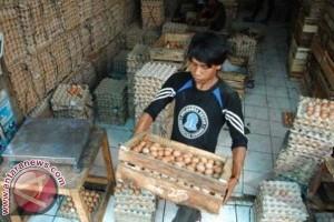 Harga Telur di Mamuju Naik