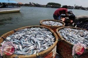 Hasil tangkapan ikan nelayan Majene berkurang