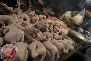 Harga Ayam Potong Mamuju Naik Jelang Lebaran