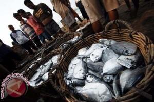 Produksi ikan laut Selayar urutan ketiga