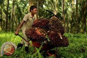 Pendapatan Petani Sawit Mateng Tembus Rp47 Juta