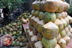 Pedagang di Mamuju keluhkan stok kelapa terbatas