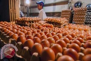 Harga telur ayam naik akibat pasokan kurang