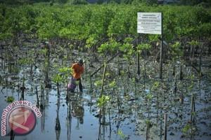 Kontur geografi UNM penanaman mangrove di Jeneponto