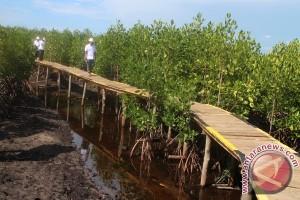 BLH Puji Program Ekowisata Mangrove PT Letawa