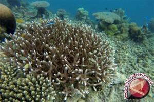 Pemkot harus tindak keras kerusakan terumbu karang