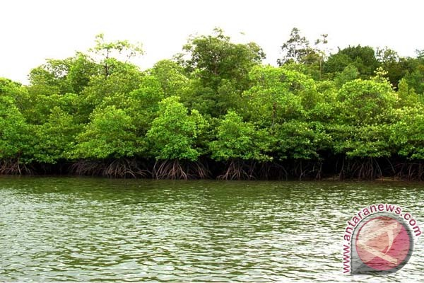 DKP Mamuju Ajak Nelayan Jaga Hutan Mangrove