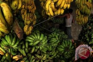 Harga pisang di Mamuju terus naik