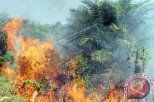 Pemkab turunkan tim investigasi kebakaran areal perkebunan
