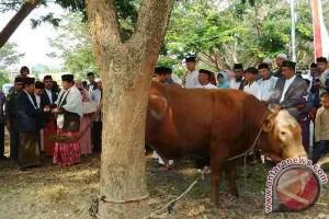 Gubernur serahkan sapi Jokowi ke PHBI Sulbar