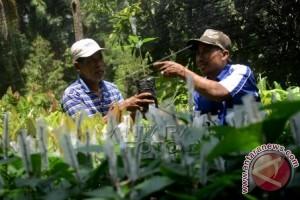 Warga Polewali Mandar Harapkan Bibit Kakao